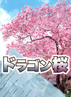 ドラゴン桜 動画の画像